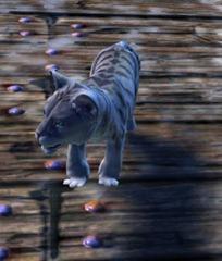 gw2-mini-snow-cougar-cub-2