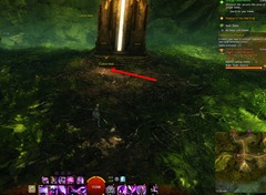 gw2-no-masks-left-behind-achievement-guide-morwood-wilds-2