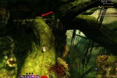 gw2-no-masks-left-behind-achievement-guide-morwood-wilds-5