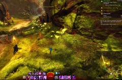 gw2-treetop-retriever-auric-basin-achievement-guide-2