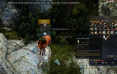 bdo-horse-taming-guide-11