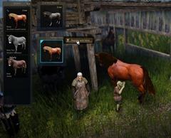 bdo-horse-taming-guide-12