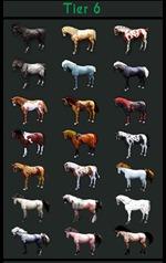 bdo-horse-tier-list-4