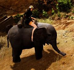 bdo-miniature-elephant-mount