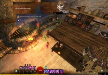 gw2-hungry-cats-locations-10