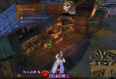gw2-hungry-cats-locations-31