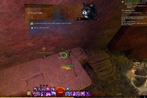gw2-hungry-cats-locations-33