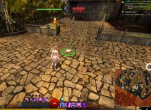 gw2-hungry-cats-locations-3