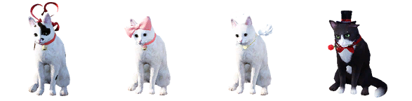 bdo-ribbon-cat