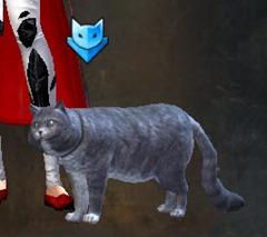 gw2-mini-blue-catmander-2