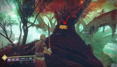 destiny-2-nessus-region-loot-chests-the-tangle-8