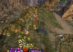 gw2-carrot-collector-achievement-guide-10