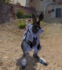 gw2-tawny-hare-mount-skin-3