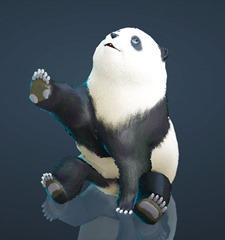 bdo-panda-pet