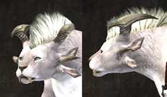 gw2-march-6-new-char-hairstyle
