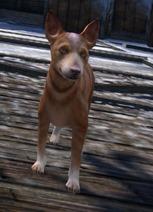 gw2-pet-dog-whistle-basenji