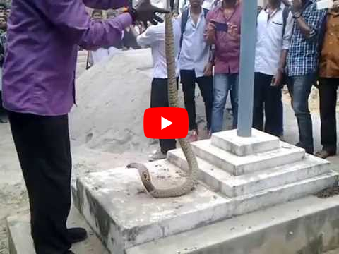 Video - Vava Suresh catching snake from A J College Of