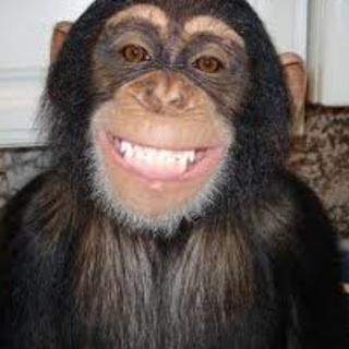 Kid Chimp