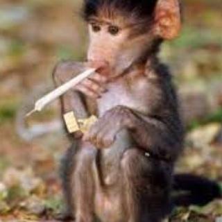 MonkeyFunSizeWeed