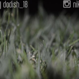 dodish_18