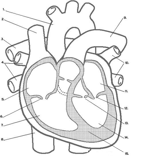 Cardiovascular System Quiz Interactive Worksheet By Jonathan Rich Wizer Me