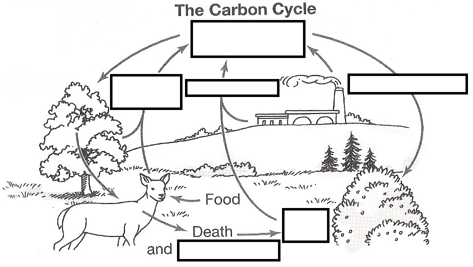 as well Mesmerizing Carbon Cycle Test Questions On Water Carbon and Nitrogen as well nutrient cycle worksheets – trungcollection in addition The Carbon Cycle and the Greenhouse Effect worksheet furthermore Carbon Cycle Worksheet Answers Inspirational Carbon Cycle Worksheet likewise  furthermore Worksheet Preview by Ladi Oiran Blended Worksheets   Wizer me furthermore Water Carbon and Nitrogen Cycle Worksheet Carbon Cycle Coloring Page moreover carbon cycle game worksheet   Carbon Cycle   Carbon Dioxide additionally Carbon Cycle Diagram Worksheet Fresh Carbon Cycle Worksheet Answers besides  moreover  furthermore Apes Biogeochemical Cycles  parison Worksheet Answers   FREE in addition PDF  34 Cycles Of Matter Answers   foon tage   Academia edu also Water Cycle Worksheet Fill In The Blank Carbon Cycle Worksheet Fill in addition Carbon Cycle Worksheet Answer Key   Briefencounters. on the carbon cycle worksheet answers