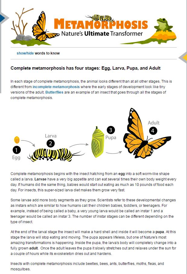 Worksheet Preview by Erica Rodriguez Blended Worksheets – Metamorphosis Worksheet