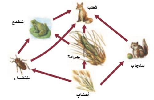 انتقال الطاقة في النظام البيئي Interactive Worksheet By Ahlam Alghasham Wizer Me