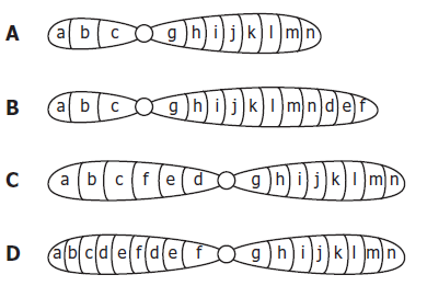 Worksheet preview by christy hogston blended worksheets wizer the diagram shows the normal sequence of genes in a particular chromosome which chromosome could have resulted from a deletion that occurred in this ccuart Image collections