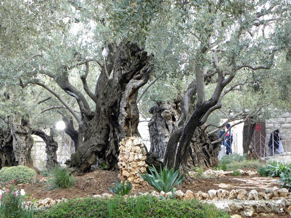 Gethsemane 556051 1920 scaled original