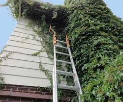 Removing Climbing Vines From Walls