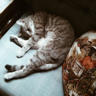 Phone Picture Roundup Part II: Sleeping Cat Pictures
