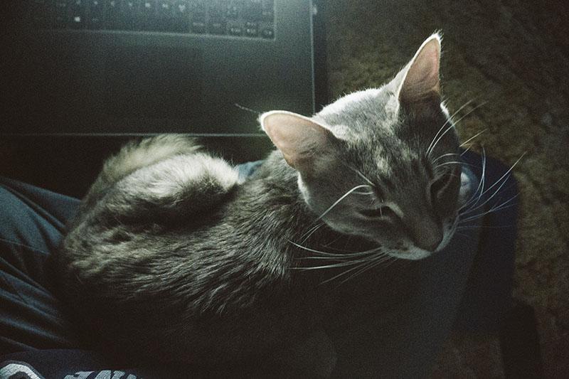 cat-sleeping-in-lap-avery-elise-and-thomas