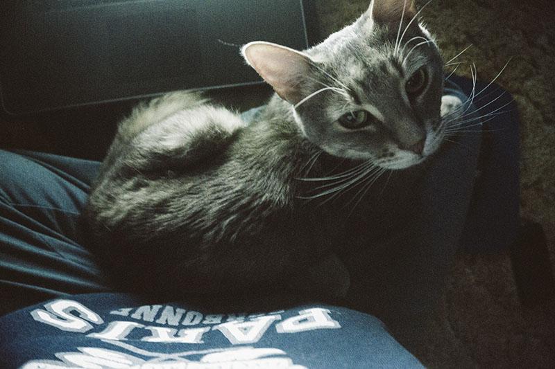 pet-lap-cat-avery-snuggling-elise-and-thomas