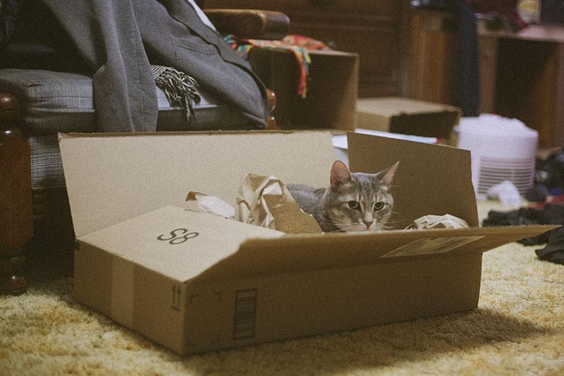 cat-nesting-in-cardboard-box-packaging