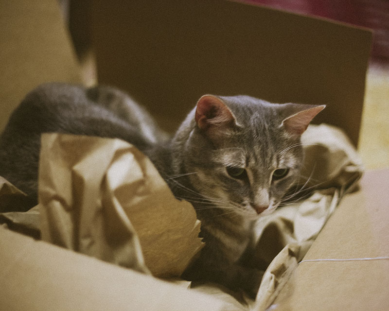 avery-elise-and-thomas-cat-in-box-packaging-amazon