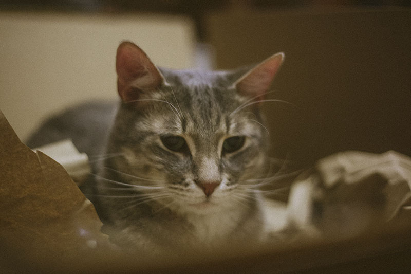 elise-and-thomas-cat-avery-pictures-cat-packages-cardboard-box