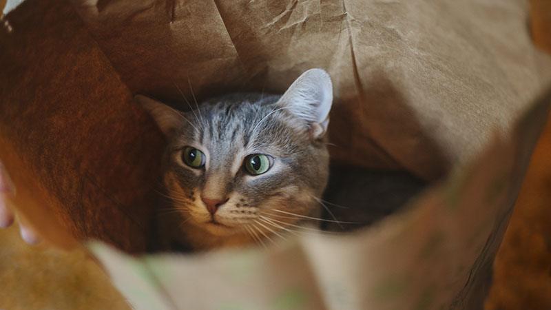 adorable-cat-in-paper-bag-lcbo-elise-and-thomas-blog