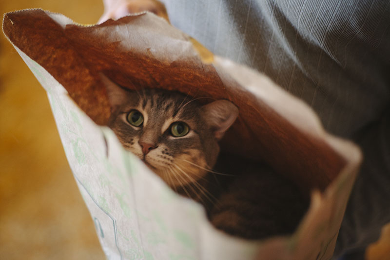 cat-avery-in-paper-bag-elise-and-thomas