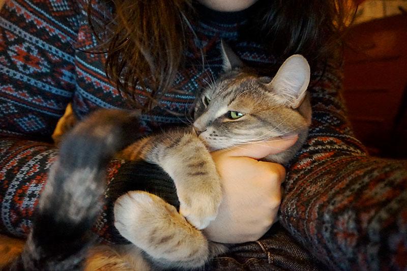 pet-cat-holding-arm-cute-elise-and-thomas