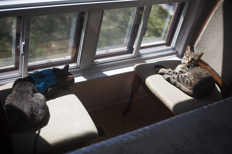 cats-lying-down-chairs-sunny-spot-sleeping