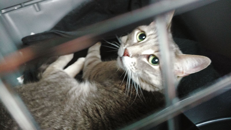 pet-travelling-british-airways-cargo-cat-travel