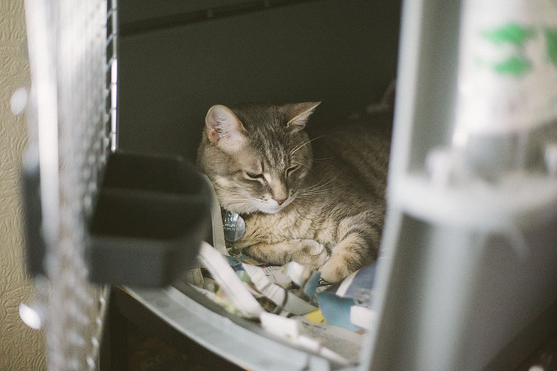 cat-napping-in-petmate-sky-kennel-carrier