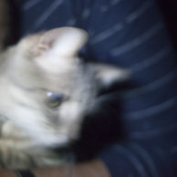 The Time the Stream of Cat Pictures Almost Took a Pause