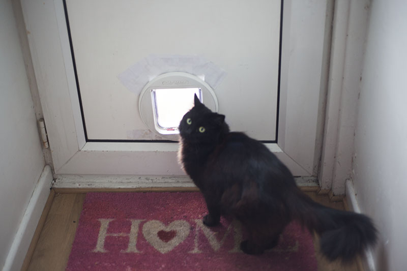 black-cat-looking-back-home-welcome-mat