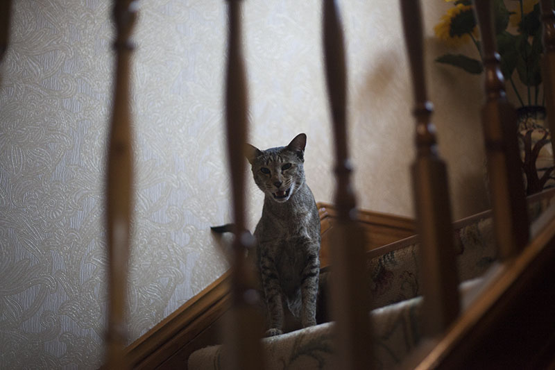 cat-staircase-staring-cute-stairwell-adorable