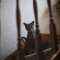 Feeding the Neighbourhood Cats II: Sammy