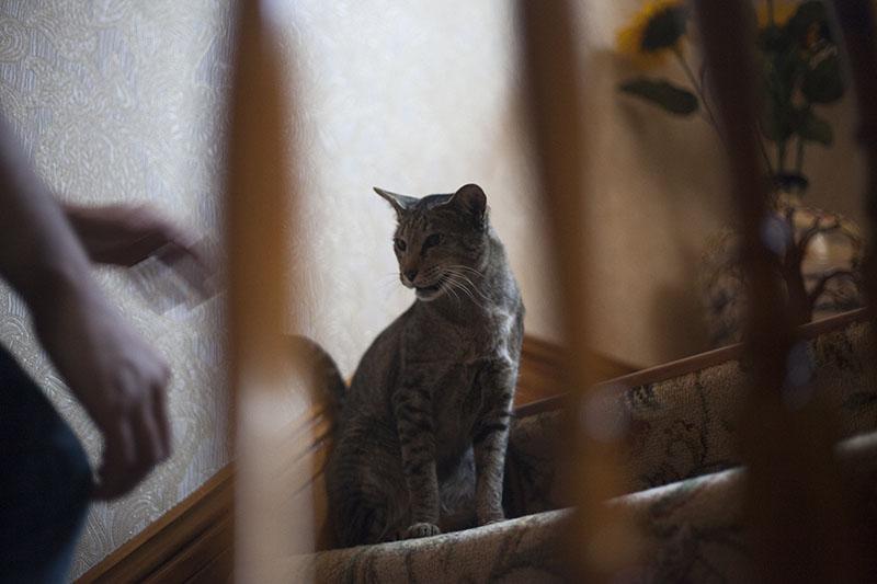 neighbour-pet-cat-sammy-pet-thomas