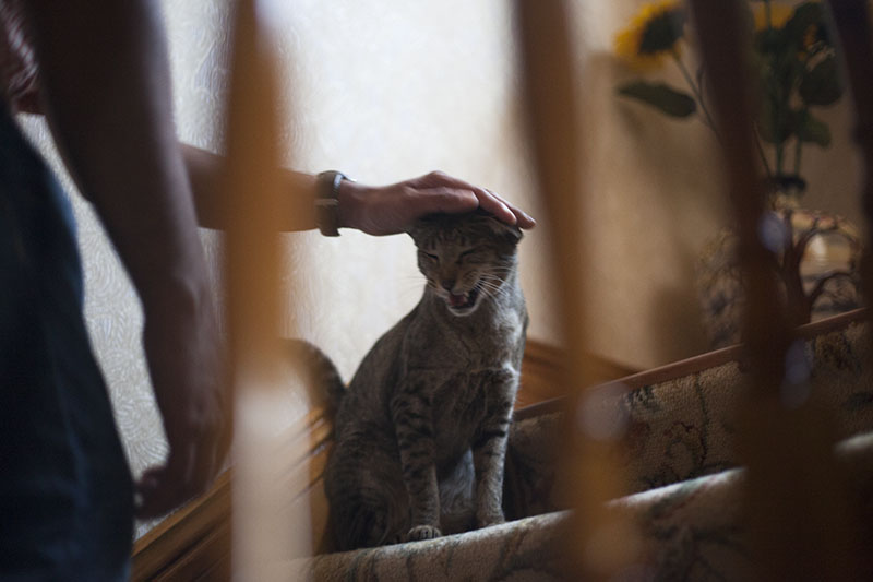 thomas-petting-neighbourhood-cat-sammy-stairs