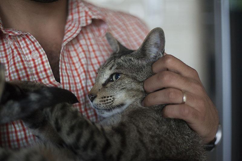 neighbour-pet-cat-sammy-snuggled-against-thomas